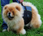Chow-Chow Nylon Hundegeschirr mit Extra Griff, Outdoor