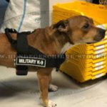 Staffordshire Bullterrier Zuggeschirr aus Nylon
