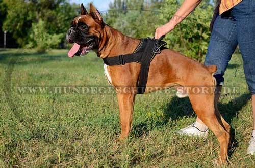 Hundegeschirr Nylon für Boxer