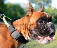 Halsband für Boxer | Boxer Hunde Halsband Nylon mit Griff
