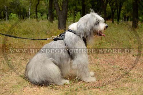Hundeleine aus Leder für tägliche Spaziergänge