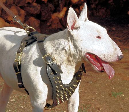 Hundegeschirr Leder Mit Messing Dekor Exklusiv 119 9