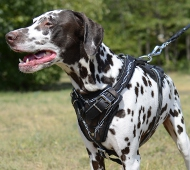 Dog Harness K9 Dalmatian | Designer Harness Leather Padded