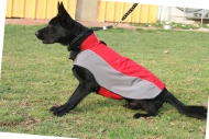 Dog Coat for German Shepherd | Dog Clothes for Winter