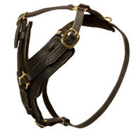 Leather Dog Harness Padded | Fine K9 Dog Harness