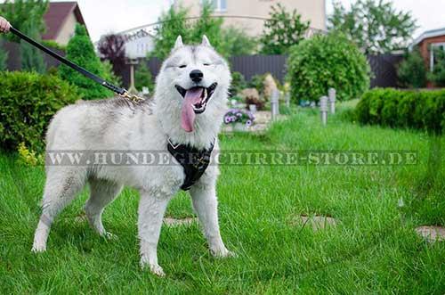 Husky Hunde Geschirr für Sport