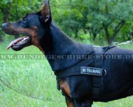 Doberman Nylon Geschirr für Trainings