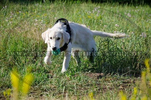 Hundegeschirr nylon Golden Retriever kaufen