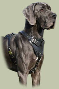 Protection/Attack Leather Dog Harness for Great Dane