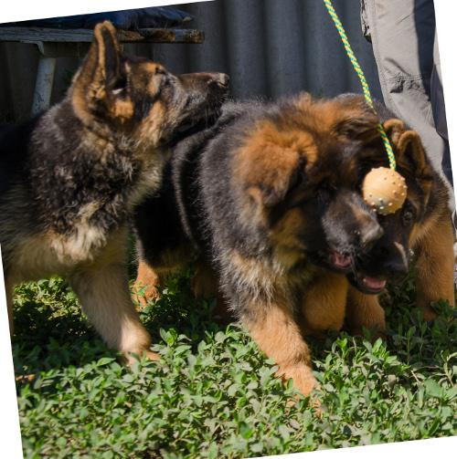 Gummiball für kleine hunderassen spielzeug welpen cm