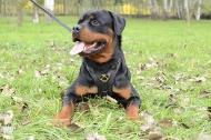 Rottweiler Luxury Handcrafted Padded Leather Harness