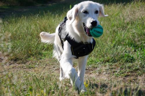 Gummi Spielzeug für Hunde
