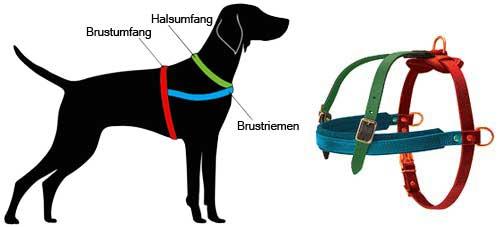 Hundegeschirr Leder messen