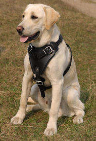 Agitation Leather Dog Harness for Labrador