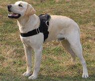 Allwetter-Hundegeschirr aus Nylon für Labrador