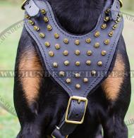 Hundegeschirr für Dobie | Dobermann Geschirr mit Zier-Spikes
