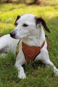 Small Walking Dog Harness for Middle and Small Dogs