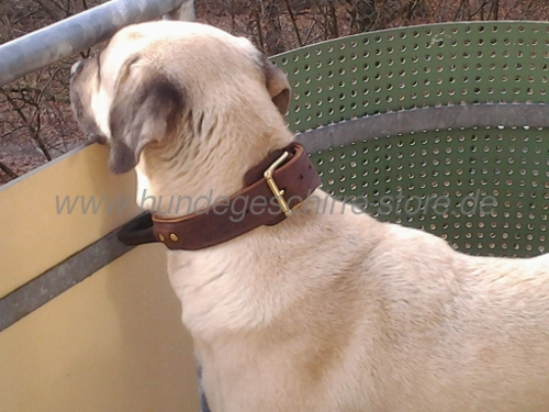 leather dog collar with handy handle