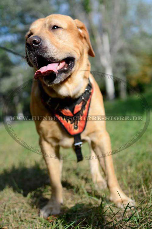 Labrador HundBeschreibung