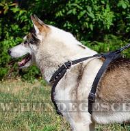 Laika Geschirr mit Pyramiden | Prachtvolles Hundegeschirr