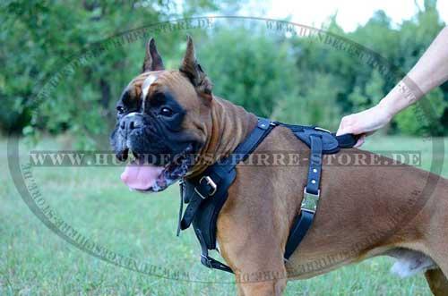 K9 Brustgeschirr für Boxer und Hunde