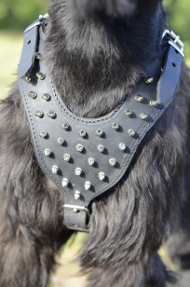 Dog Harness Leather with Spikes | Big Schnauzer Spiked Harness