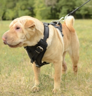 Harness K9 Shar Pei, Padded Harness Leather