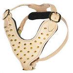 Tan Hundegeschirr aus Leder mit goldfarbigen Stacheln