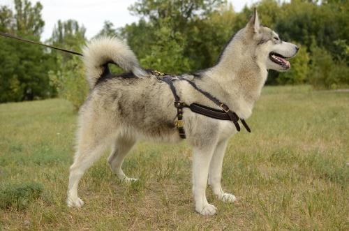 Hundegeschirr online kaufen