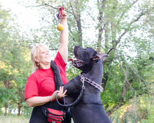 Gummiball mit Schnur für Hundeaktivitäten