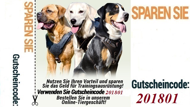 https://www.hundegeschirre-store.de/images/banners/Neujahr-des-Hundes.jpg