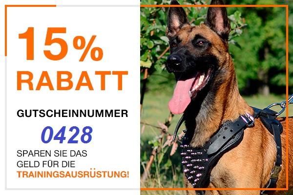 Sporthund Zubehör Sonderangebot