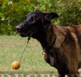Leder Erziehungshalsband | Zughalsband für Malie Hundeshop