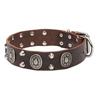 Wide leather dog collars with sophisticated design
