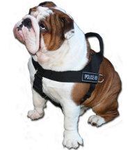 Neues Allwetter-Hundegeschirr aus Nylon K9, Englische Bulldogge