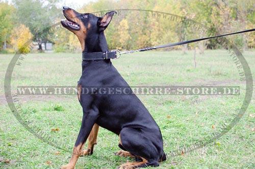 Hundehalsband fuer Dobermann Pinscher Leder mit Polsterung