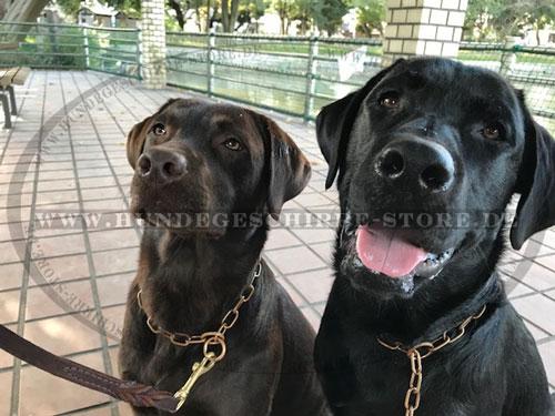 Kettenhalsband aus Curogan von Herm Sprenger für große Hunde Fellschoner