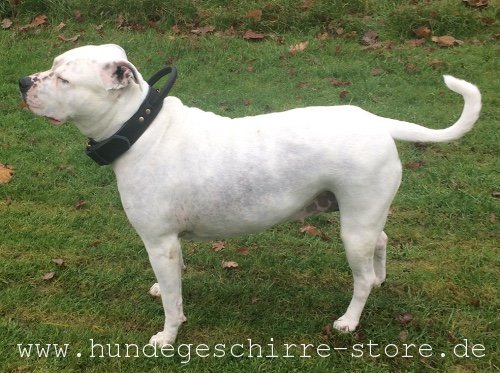 qualitatives Leder Hundehalsband