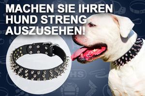 Hundehalsband aus Leder verziert