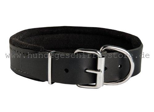 Gepolstertes Hundehalsband Leder mit Dornschnalle aus vernickeltem Stahl