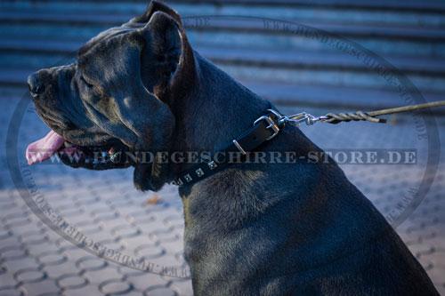 Klassische Dornschnalle Hundehalsband für Hundeauslauf
