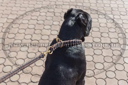 Geflochtenes Lederhalsband für Hunde mit Messing Beschlägen