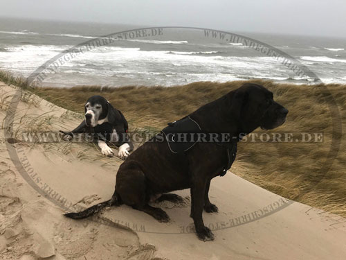Hundegeschirr aus Nylon für großen Hund kaufen