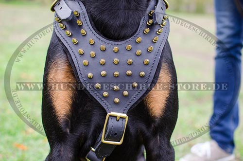 Dobermann Geschirr Leder mit Messing-Spikes