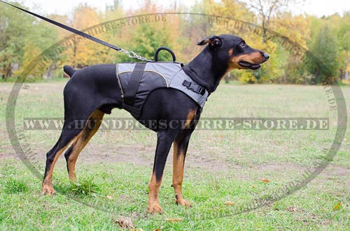 Doberman dog harness Nylon padding
