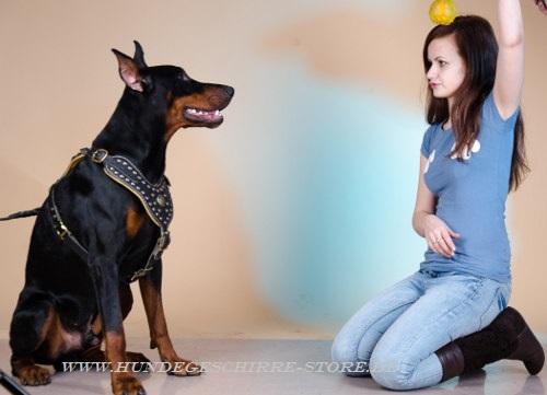 Leder Hundegeschirr gepolstert