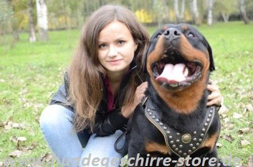 Hundegeschirr Leder gepolstert für Rotweiler