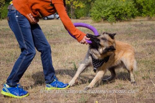 Schäferhund Hundegeschirre Leder