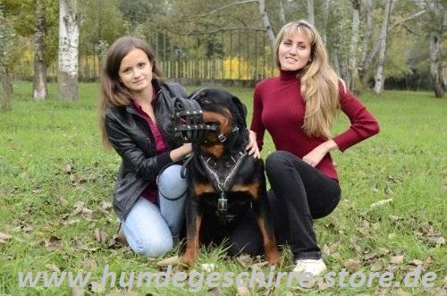 Hundegeschirr Leder gepolster mit Nieten Rotweiler