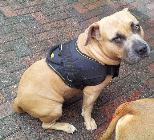 Nylon Brustgeschir für IPO Training mit Hunden